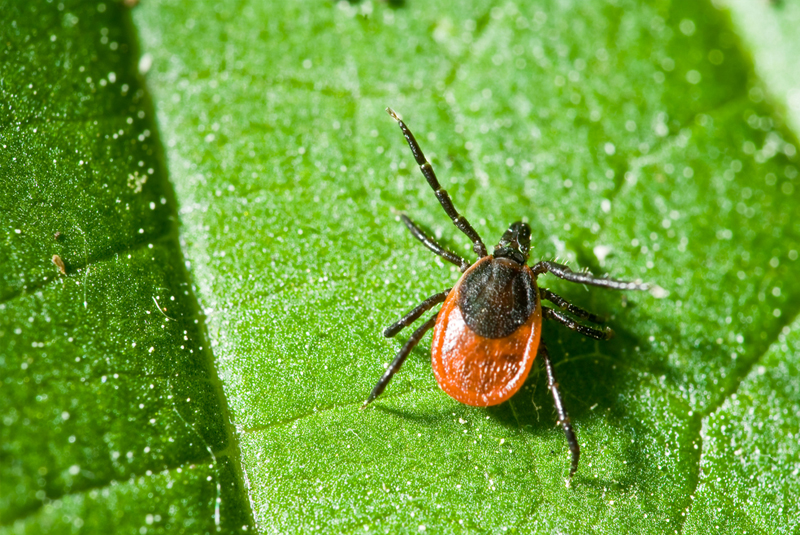 Flea, Tick & Mosquito Control
